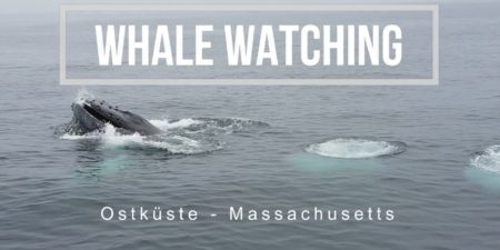 whale watching usa in boston